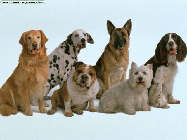 смотреть фото всех пород собак